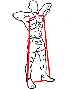 tubel-upright-rows-1.jpg