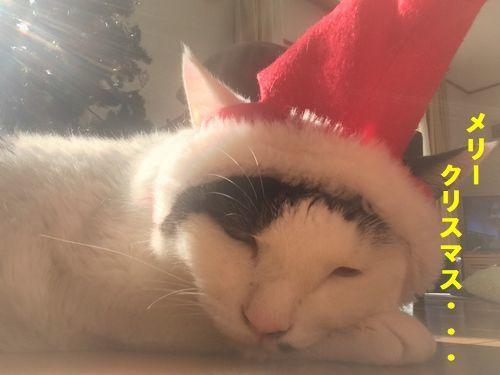 2018 christmas3