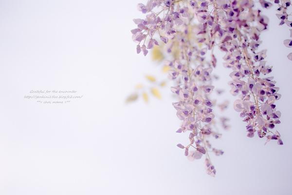 _MG_0606.jpg