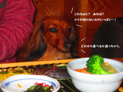 03-24-hamanako48.jpg