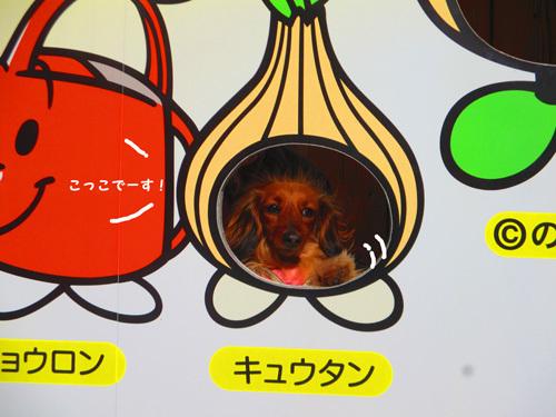03-24-hamanako5.jpg