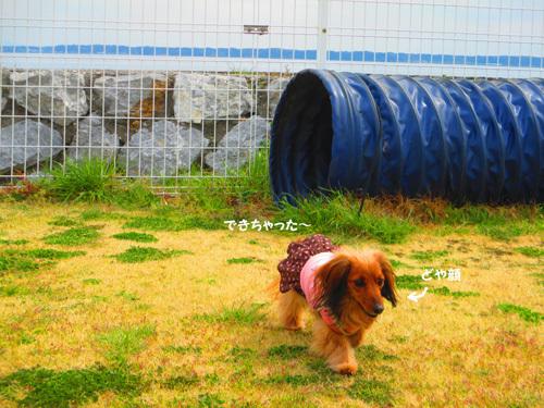 03-25-hamanako71.jpg