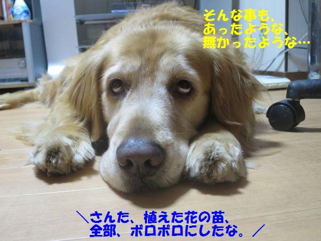 IMG_0009_20170525230450c7b.jpg