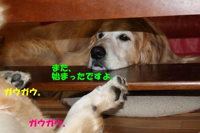 IMG_0397_20170614234315ec0.jpg