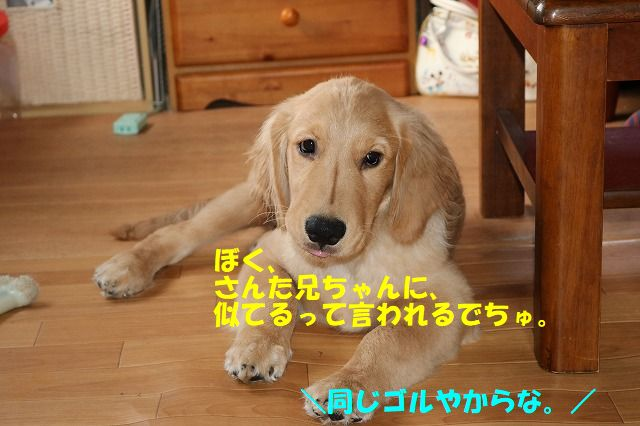 IMG_0750_2017062322464396a.jpg