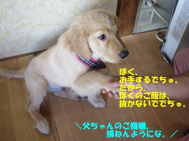 IMG_8643_201705272316363b6.jpg