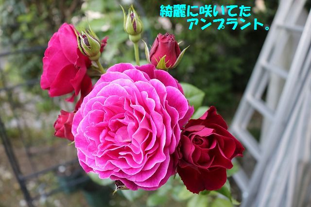 IMG_8756_20170519221006fd0.jpg