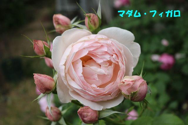 IMG_9116.jpg