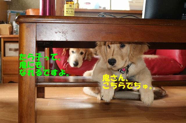 IMG_9195_20170524234759017.jpg