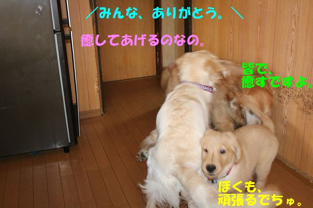 IMG_9247_201705252314377d1.jpg