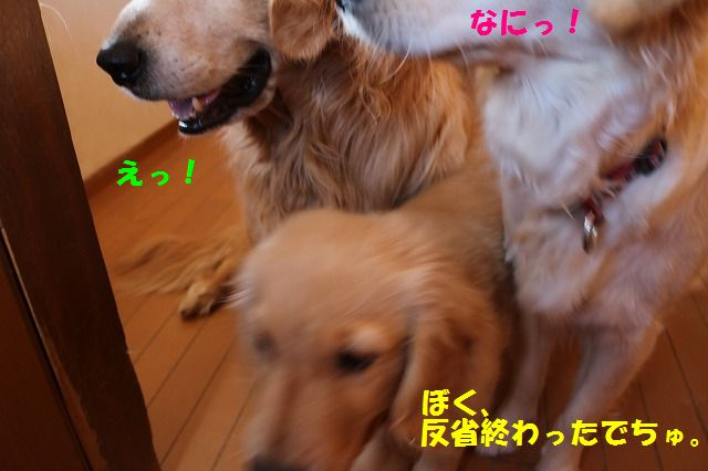 IMG_9348.jpg