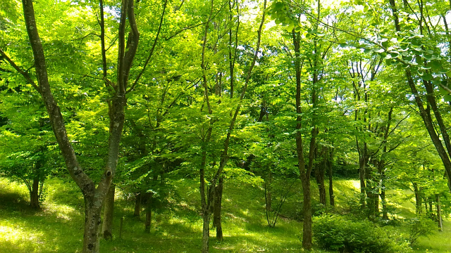 森林公園 20170615-9