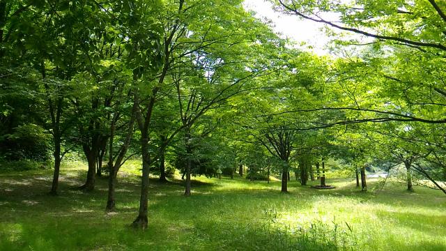 森林公園 20170615-10