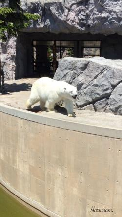 今年も旭山動物園に行ってきたこと