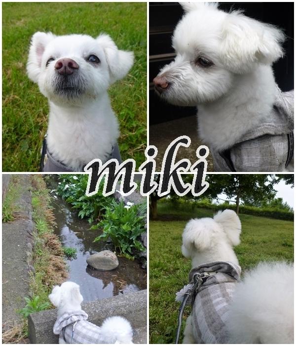 miki-001.jpg