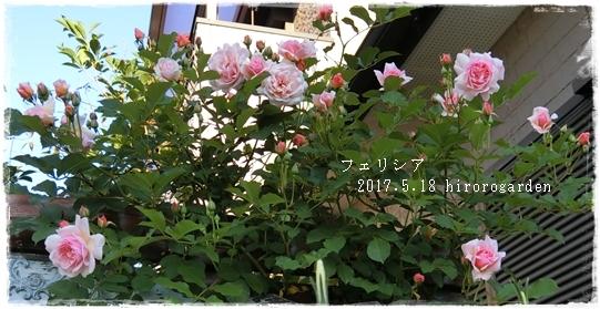 CIMG11671717.jpg
