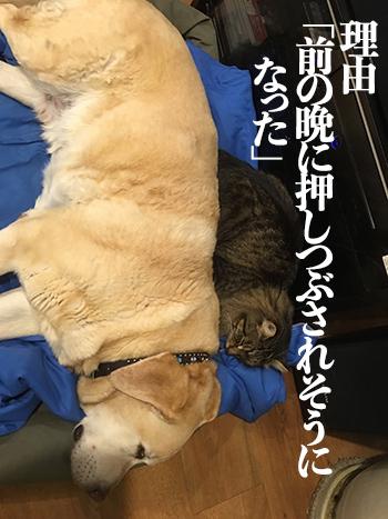 01062017_dog4mini.jpg