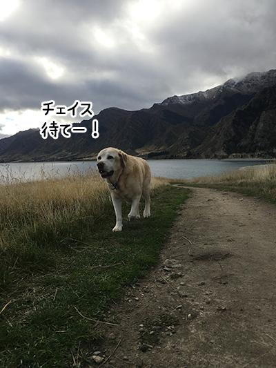 04062017_dog1.jpg