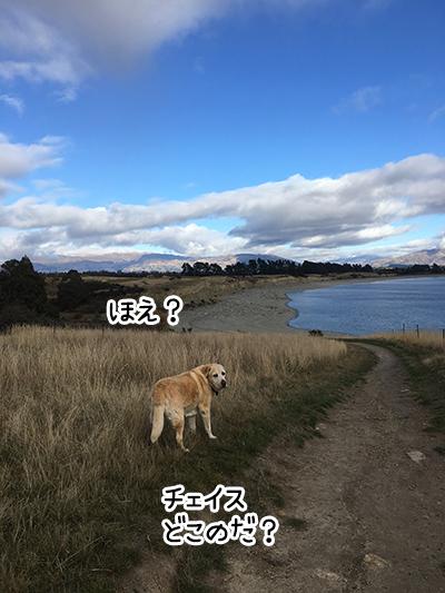 04062017_dog4.jpg