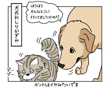 15062017_dog2mini.jpg