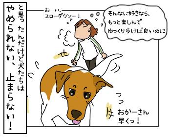 16062017_dog4mini.jpg