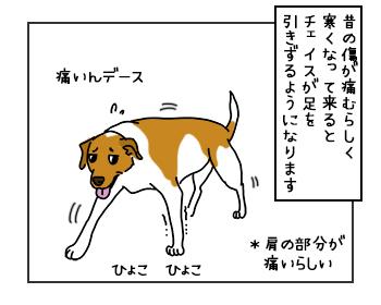 17052017_dog1mini.jpg