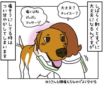 17052017_dog2mini2.jpg
