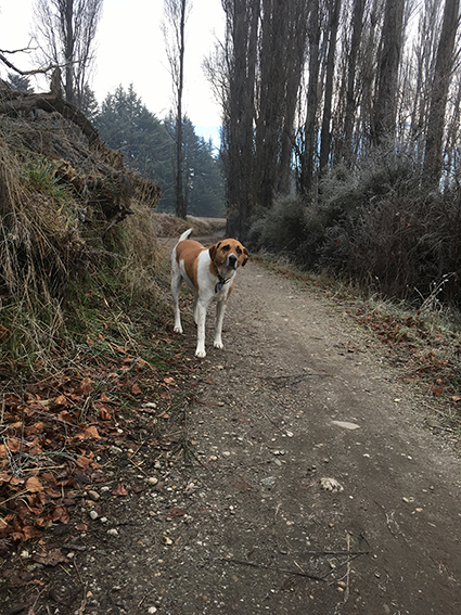 17062017_dogpic3.jpg