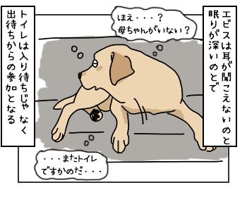 19052017_dog1mini.jpg