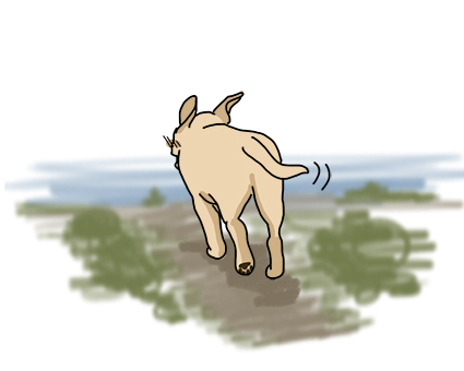 19062017_dogillustration.jpg