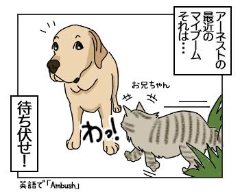 21062017_dog1mini.jpg