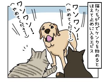 24052017_dog1mini.jpg