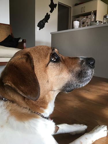 27062017_dogpic1.jpg