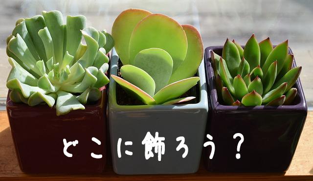 【これだけは知っておきたい!】3種類の観葉植物の形&もたらす効果