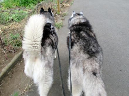ふたりでお散歩