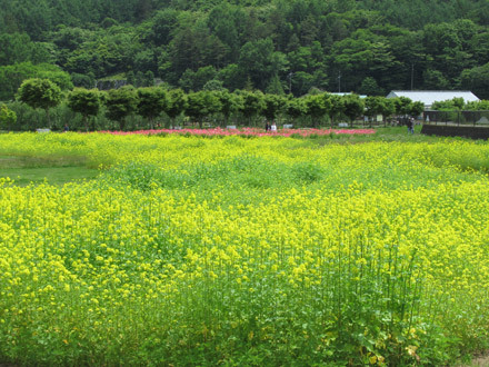 花の都公園