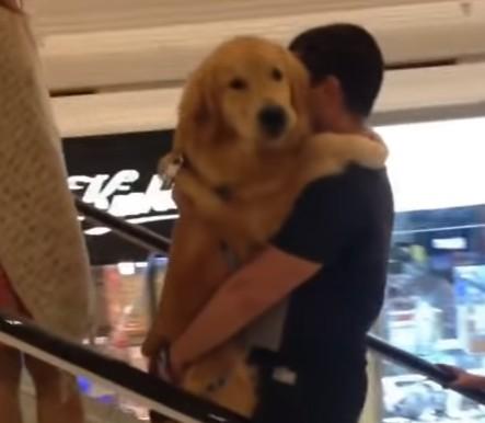 dog_2017051821045490f.jpg