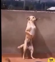 lets dance01