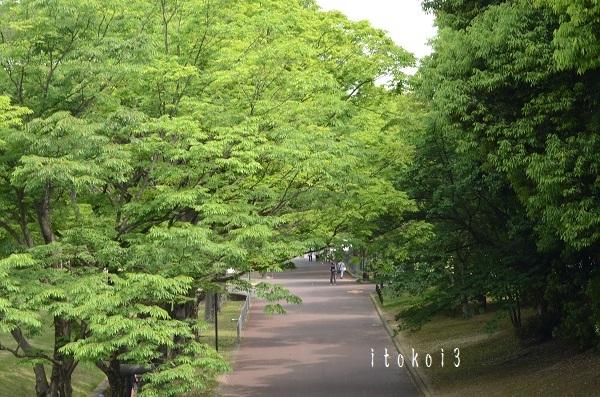 HIR_5129.jpg
