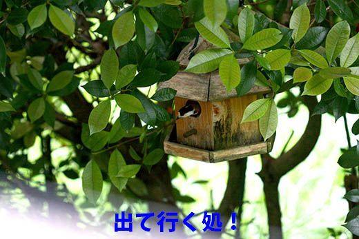 IMG_7928_.jpg