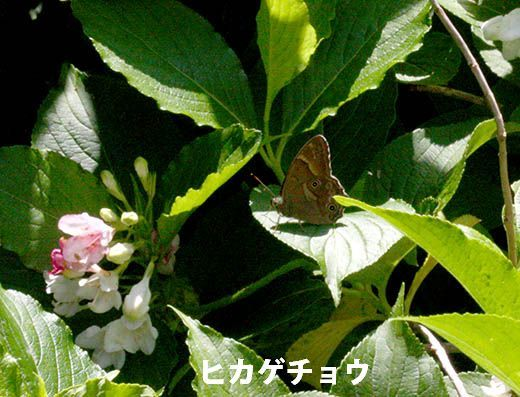 IMG_8017_.jpg
