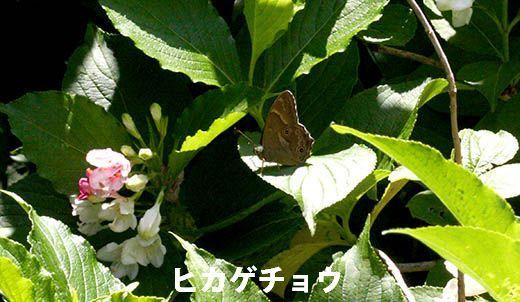 IMG_8020_.jpg