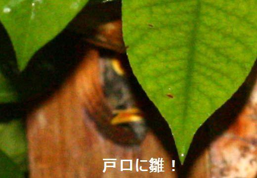 IMG_8840_.jpg