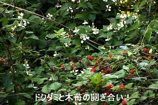 IMG_8977.jpg