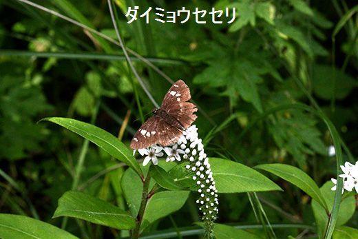 IMG_9279_.jpg