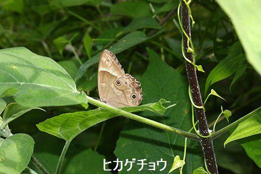 IMG_9315_.jpg