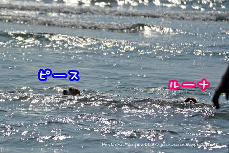 170514_hama4.jpg
