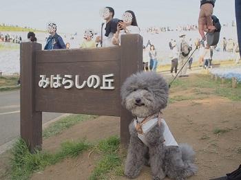 ひたち海浜公園20170430-12