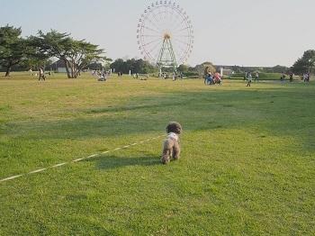 ひたち海浜公園20170430-18