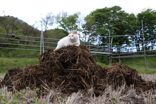 かご猫 Blog 肥やし